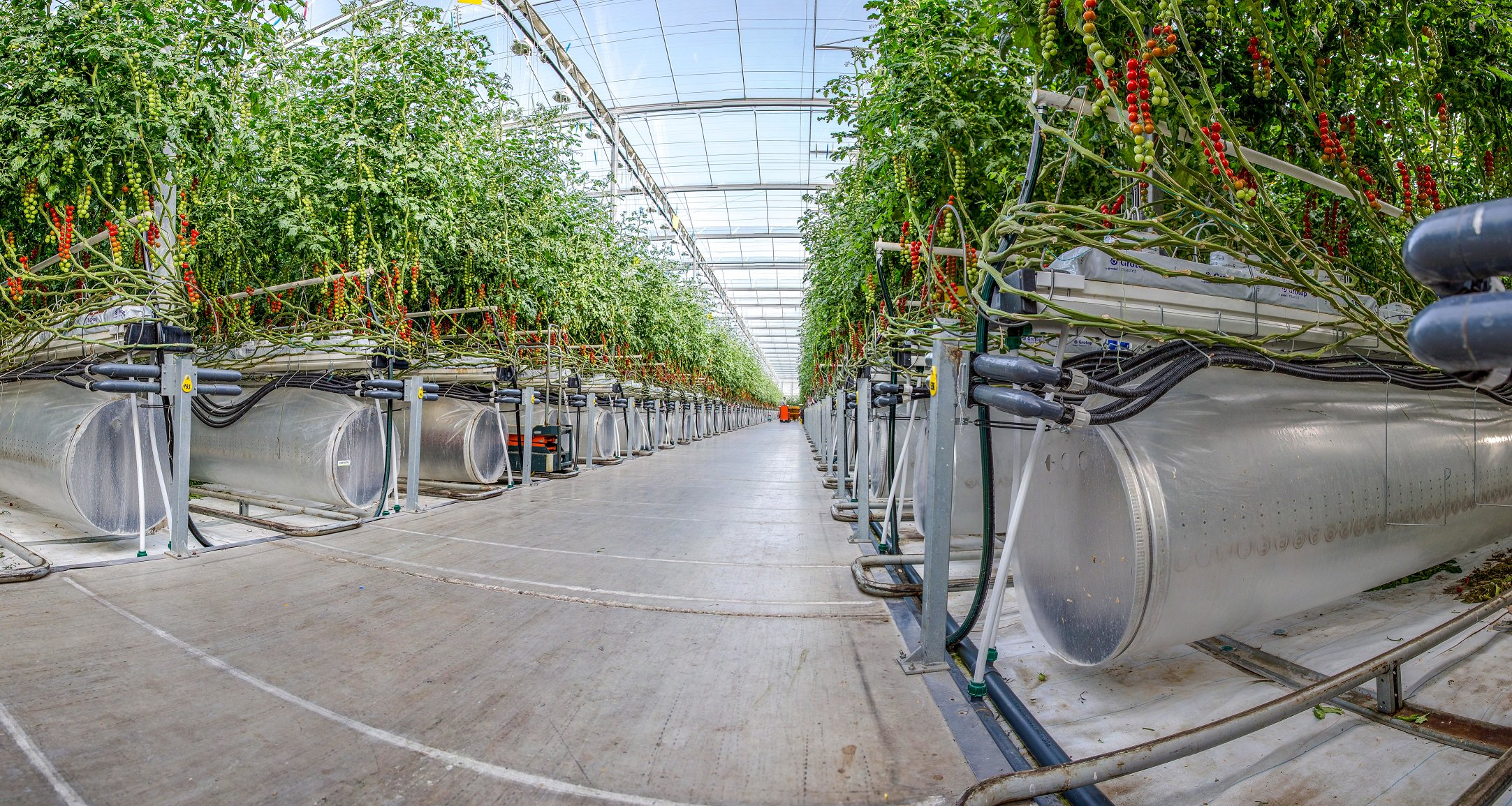 UAE-based Pure Harvest announces progress in $4.5m seed funding round