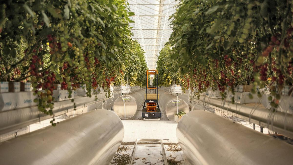 Generation Start-up: The mission to grow tasty produce in the desert